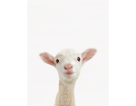 Lamb_Art for Nursery